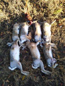 охота на зайца маныч